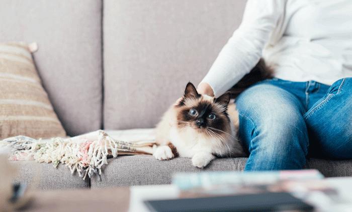 ペット(猫)と暮らす