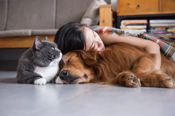 ペット(犬、猫)とくつろぐ