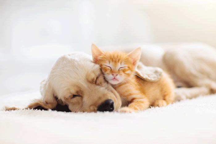 くつろぐペット(犬、猫)
