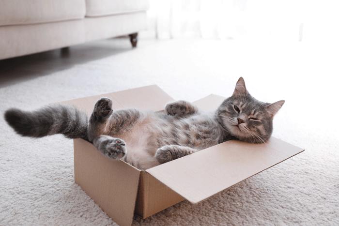 ペットと暮らす:くつろぐ箱入り猫