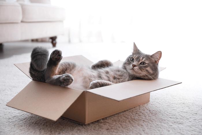 ペットと暮らす:箱入り猫
